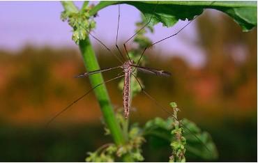 Środki owadobójcze i na gryzonie